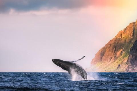 戏水的鲸鱼