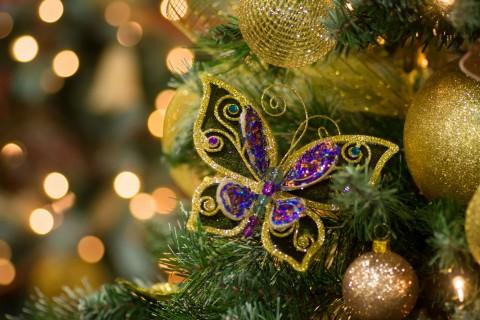 漂亮的蝴蝶饰品