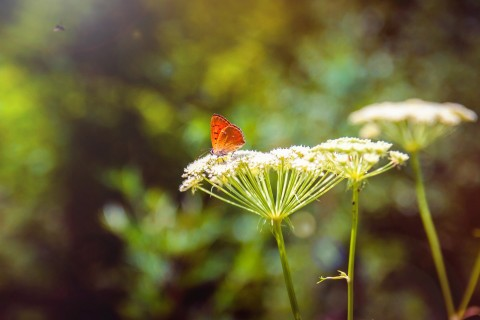 蝴蝶与花的情愫