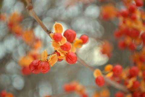 树上的新鲜浆果