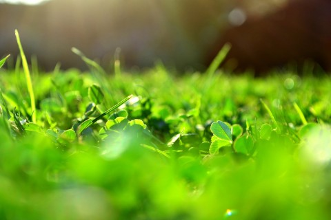 春天里的小草