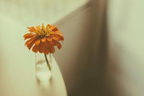 瓶子里的唯美花朵