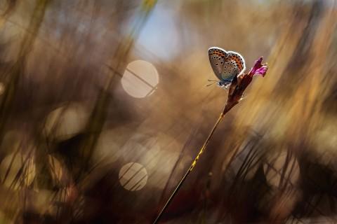 停歇的美丽蝴蝶