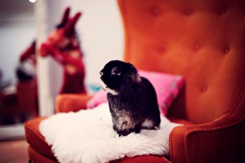 精灵小兔子