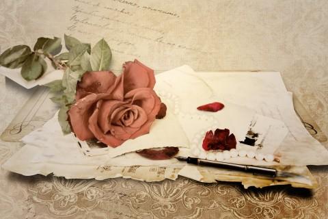 赠你爱的玫瑰