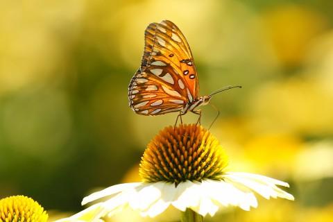 蝴蝶的魅力