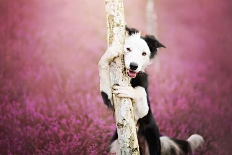 抱树的萌狗