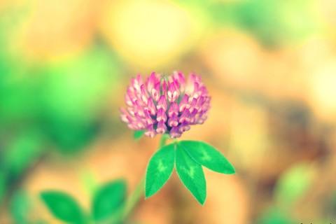 清新唯美花卉