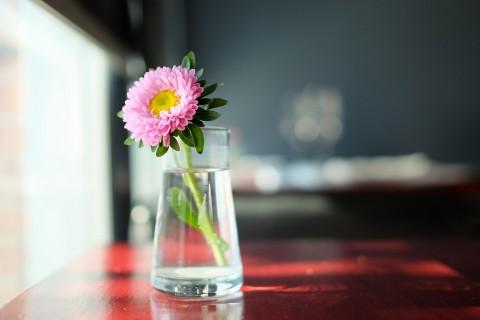 杯子里的非洲菊