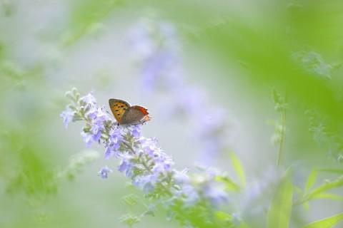 唯美清新蝴蝶