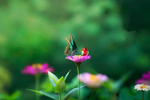 阿狸和蝴蝶的约会
