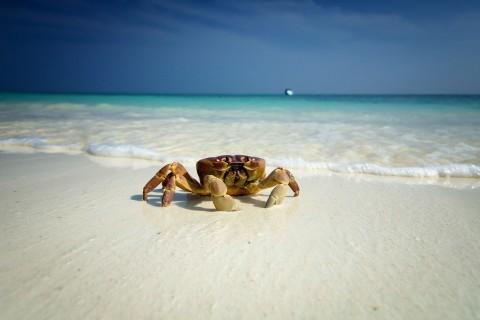 爬行的螃蟹