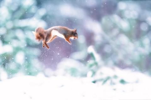 跳跃的松鼠