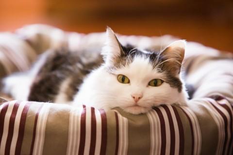 慵懒的猫咪