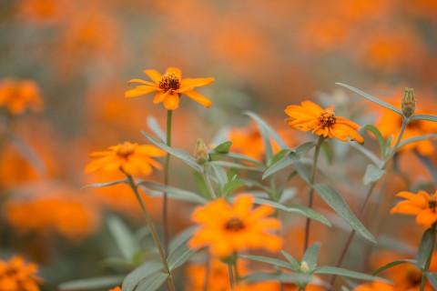 唯美黄色花卉