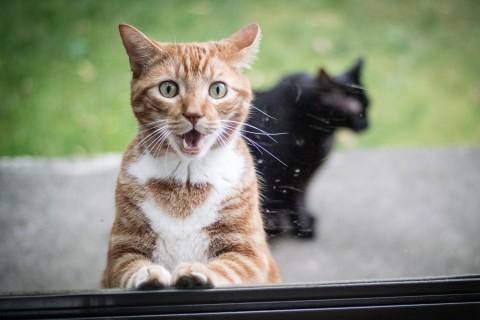 惊讶表情的猫