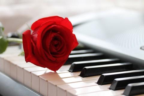 钢琴上的红玫瑰