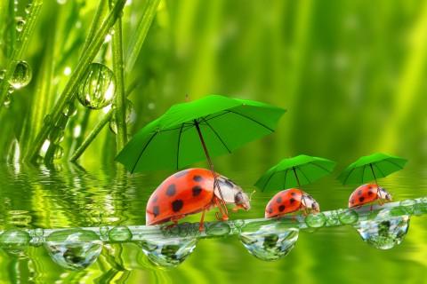 撑伞的七星瓢虫