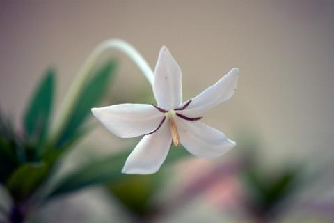 清新小花卉