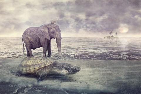 乌龟背上的大象