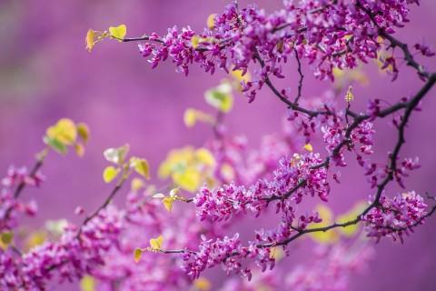 盛开的紫色花朵