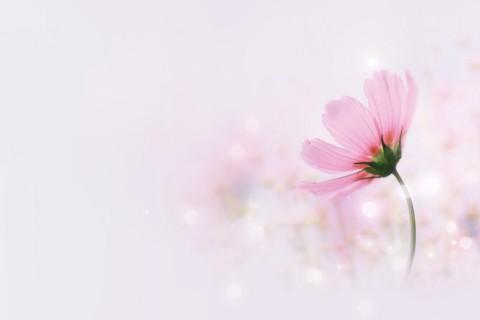 淡雅粉色小花