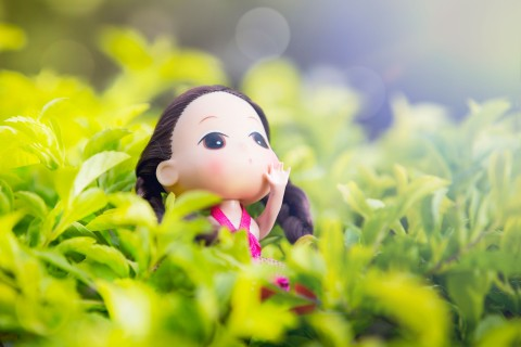 阳光中的娃娃
