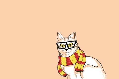 戴眼镜的猫