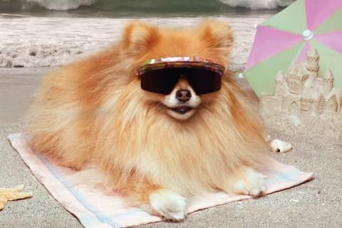 戴墨镜的狗狗