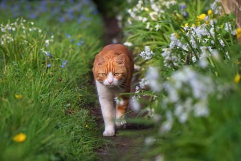 草丛里行走的猫咪