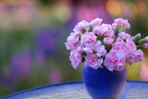 康乃馨插花