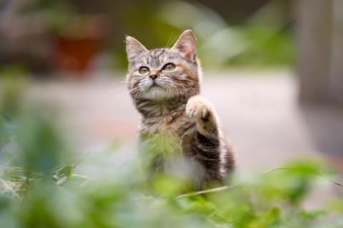 乖巧的小猫