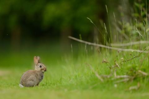 孤单的小兔子
