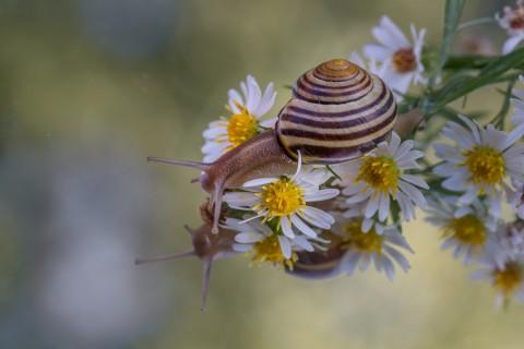 花卉上爬行的蜗牛
