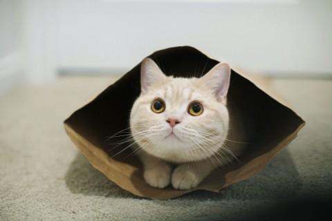 躲藏的猫咪