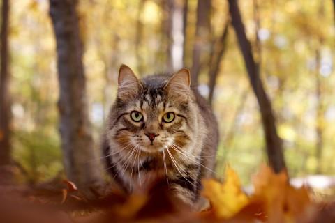 呆萌可爱的小猫