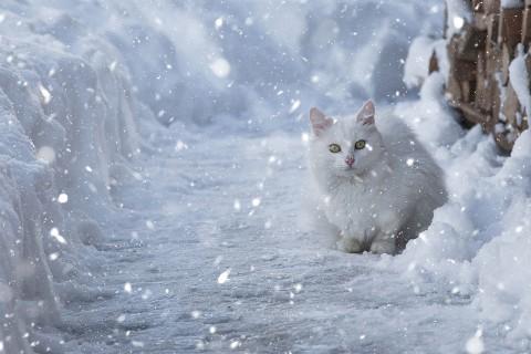 雪地里的猫咪