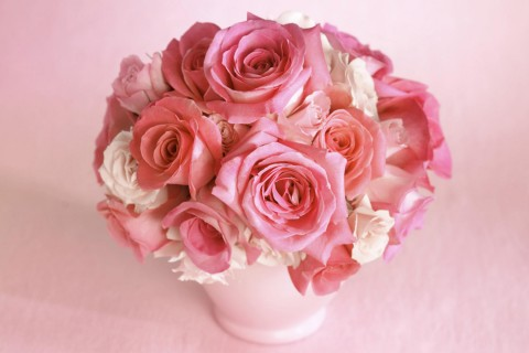 玫瑰花盆栽