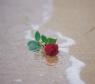 海滩玫瑰花