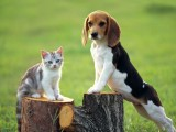 小狗与猫咪