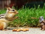 可爱金花鼠