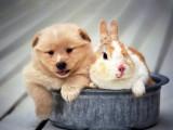 小狗与兔子