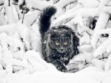 雪地中的猫咪