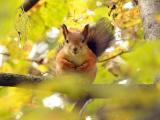 森林里的小松鼠