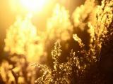 冬日的暖阳