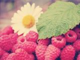 成熟的山莓