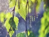 二十四节气之雨水