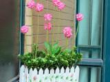 美丽的栅栏花