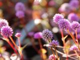 唯美紫色花卉