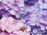 粉色花朵上的蜗牛